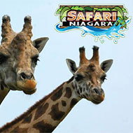 Hotel Packages - Safari Niagara Package - Four Points by Sheraton Niagara Falls Hotel